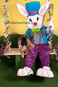 cocos canine cabana ebunny 2015 062