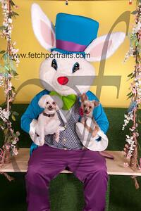 cocos canine cabana ebunny 2015 071