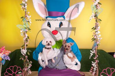 cocos canine cabana ebunny 2015 066