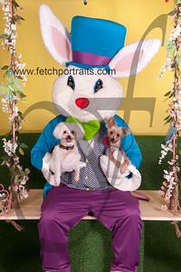 cocos canine cabana ebunny 2015 072