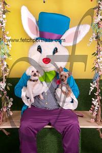 cocos canine cabana ebunny 2015 063