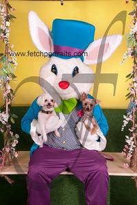 cocos canine cabana ebunny 2015 064