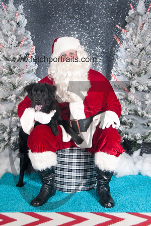 dogaholics_santa_2016 277