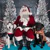 dogaholics_santa_2016 560