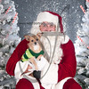 dogaholics_santa_2016 629