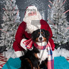 dogaholics_santa_2016 413