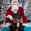 dogaholics_santa_2016 586