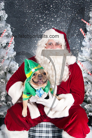 dogaholics_santa_2016 748