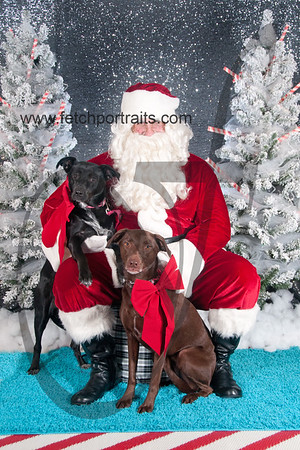 dogaholics_santa_2016 584