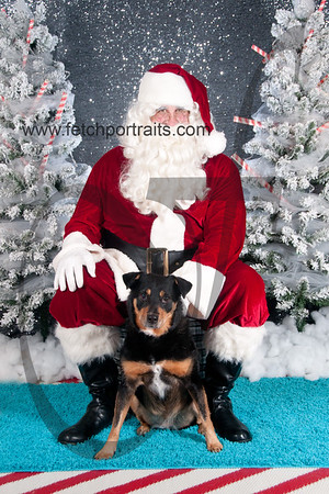 dogaholics_santa_2016 558