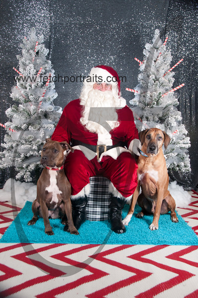 dogaholics_santa_2016 318