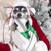 dogaholics_santa_2016 204