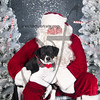dogaholics_santa_2016 747