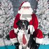 dogaholics_santa_2016 030
