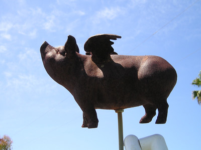 Feed the flying pig--If your dog soils the agility field, you must deposit $1 into Mr. Pig!