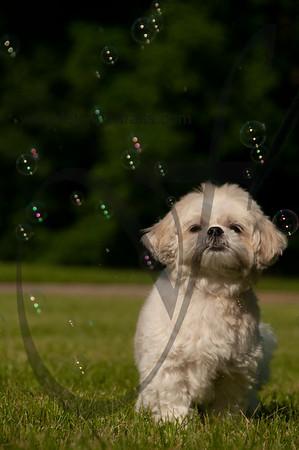 bubblepup_18_pr-2485