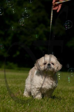 bubblepup_18_pr-2479