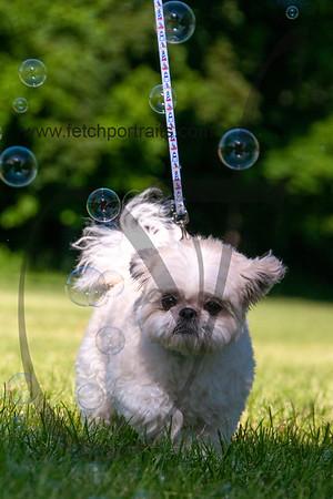bubblepup_18_pr-2426