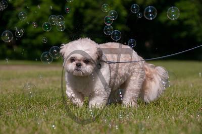bubblepup_18_pr-2474
