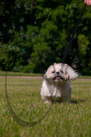bubblepup_18_pr-2483