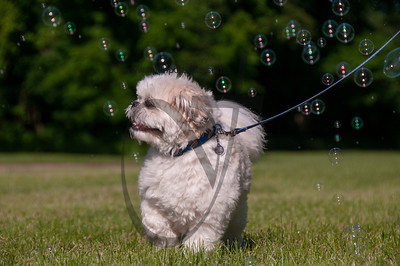 bubblepup_18_pr-2477