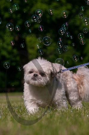 bubblepup_18_pr-2471