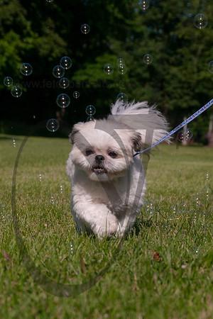 bubblepup_18_pr-2446