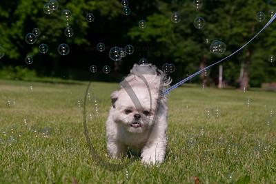 bubblepup_18_pr-2445