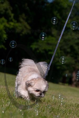 bubblepup_18_pr-2456