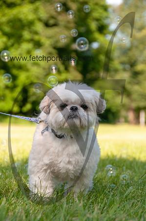 bubblepup_18_pr-2418