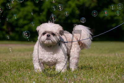 bubblepup_18_pr-2476