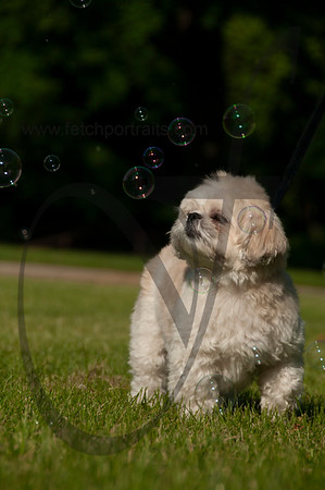 bubblepup_18_pr-2481