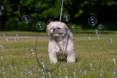 bubblepup_18_pr-2439