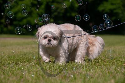 bubblepup_18_pr-2475