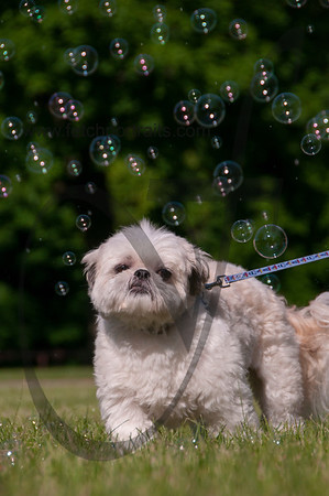 bubblepup_18_pr-2472
