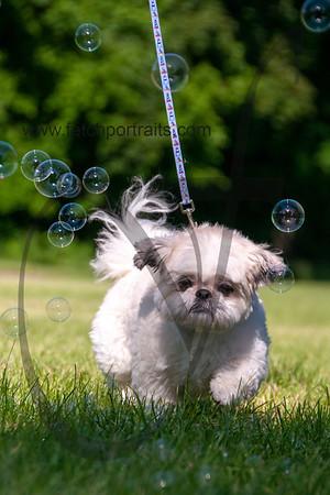 bubblepup_18_pr-2425