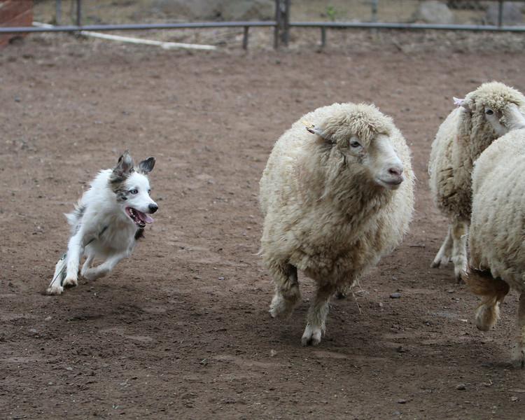 wink herd1