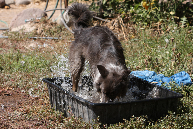 Indy cooling off after herding