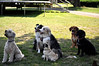 Buddy, Finn, Daisy, unknown, Maxi, Maria