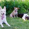 Daisy, Daisy and Bella