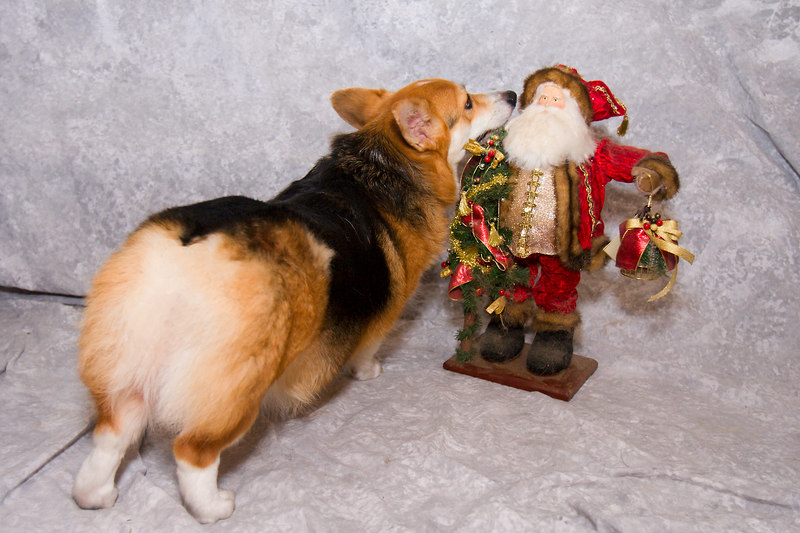 Merry Chapel meets santa