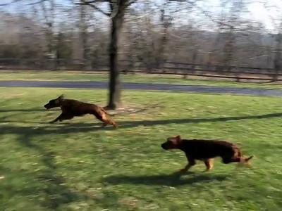 Dog Game - 12/19/2011