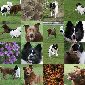 Dog collages