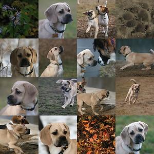 doghouse portraits