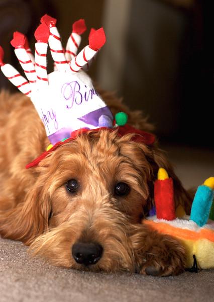 Archie's First Birthday