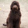Bruno 8 months