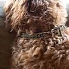 A_collar