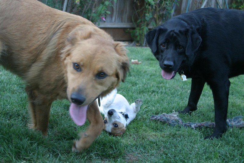 Millie, Max and live toy - Jasmine.<br /> San Jose, CA