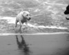 "<span style=""color:#FFFF00""> <strong> And who emerges from the pounding surf? Super Dog!!"