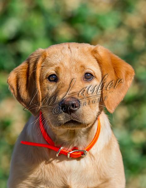 Dogs, domesitc dogs, mammals